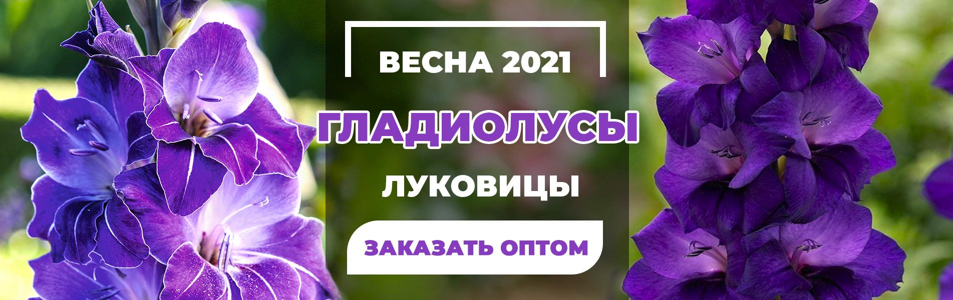 Весна 2021 Гладиолусы