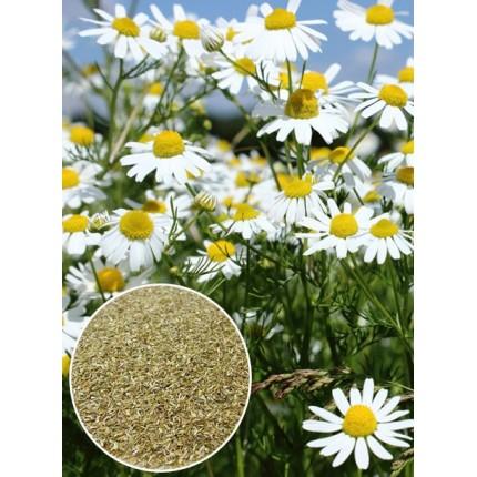 Ромашка Аптечна вагова (насіння) 1 кг