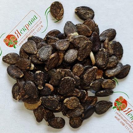Арбуз Цельнолистный весовой (семена) 1 кг