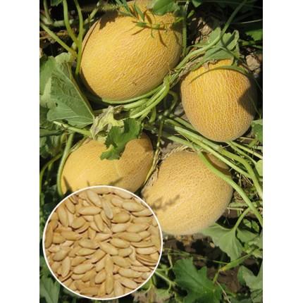 Дыня Кредо весовая (семена) 1 кг