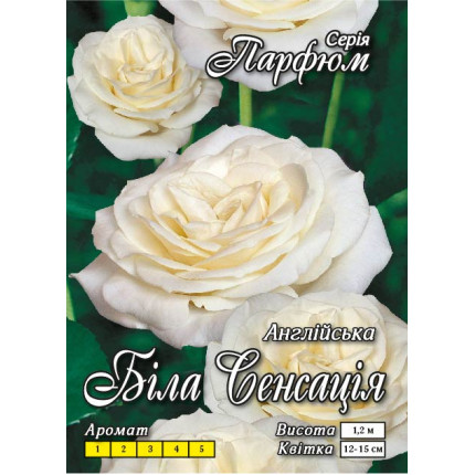 Троянда англійська Біла Сенсація (контейнер)
