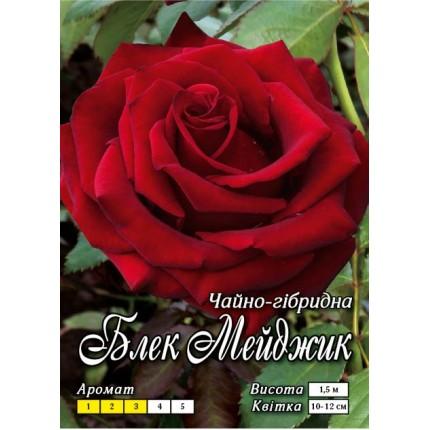 Троянда ч/г Блек Меджик клас А
