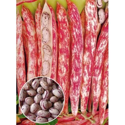 Квасоля Борлотто вагова (насіння) 1 кг - оптом