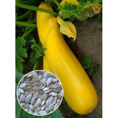 Кабачок Італійський помаранчевий ваговий (насіння) 1 кг - оптом